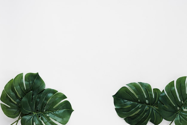 Flat lay of tropical leaves with copyspace