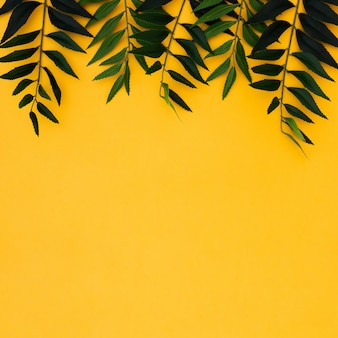 Flat lay tropical palm leaves on yellow copy space background. summer concept