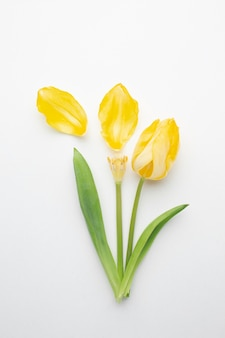 フラットレイチューリップの花