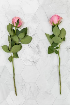 Flat lay of two roses