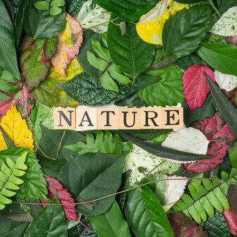フラットレイビュー多色の葉と木製のブロックに自然のテキスト。