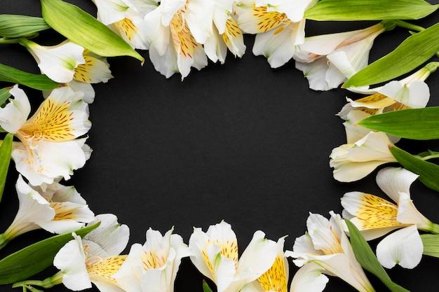 평평한 흰색 alstroemeria 프레임