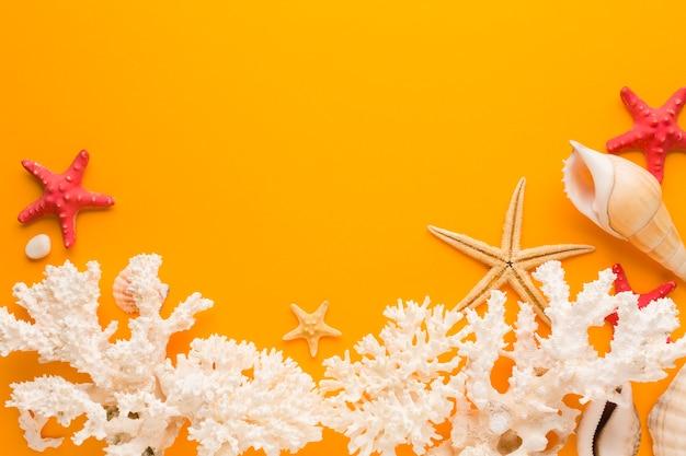 Плоский лежал белый коралл и ракушки с копией пространства