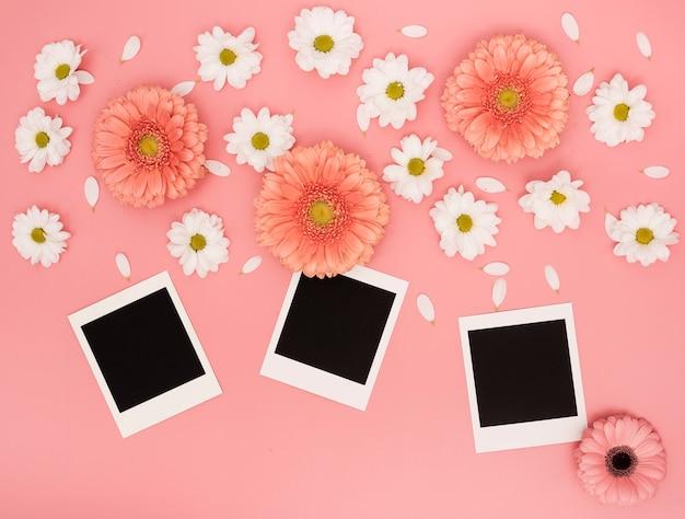 Flat lay white daisy flowers and polaroid photos