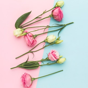 Flat lay white and pink mini roses arrangement