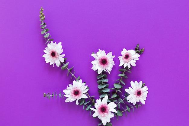 Плоские лежали белые весенние цветы с листьями