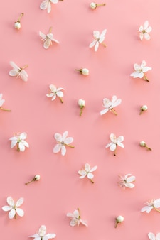 Flat lay of wild cherry buds and single flowers on pastel pink background. spring time