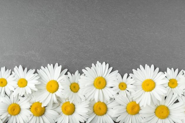 灰色のテーブルの空きスペースにカモミールの花とフラットレイ素敵なデイジーの上面図との構成