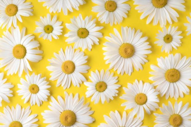 休日のお祝いのための黄色の背景のデイジーレイアウトにカモミールの花とフラットレイ