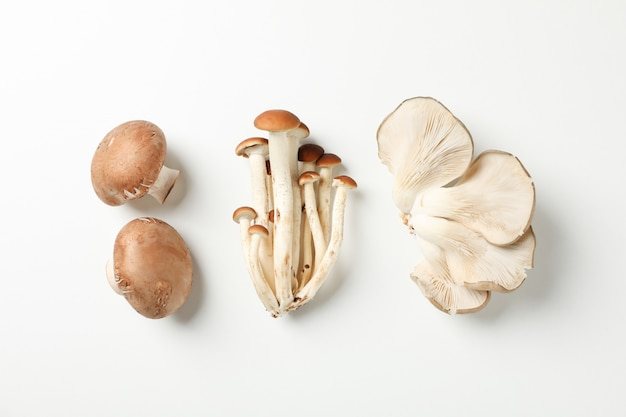 Flat lay with different mushrooms on white, space for text