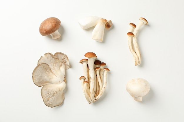 Flat lay with different mushrooms on white, top view