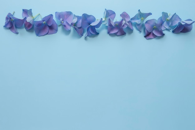 Flat lay with hydrangea or hortensia blue-purple petals on pastel blue background.