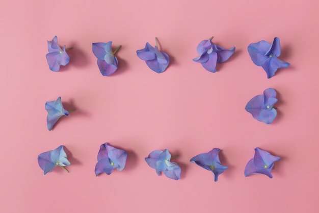 Flat lay with hydrangea or hortensia blue-purple petals on pink background. frame from flowers.