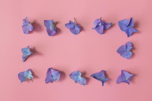 Квартира лежала с сине-фиолетовыми лепестками гортензии или гортензии на розовом фоне. рамка из цветов.