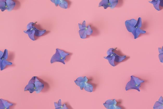 분홍색 배경에 수국 또는 hortensia 파란색-보라색 꽃잎 패턴으로 평평한 누워.