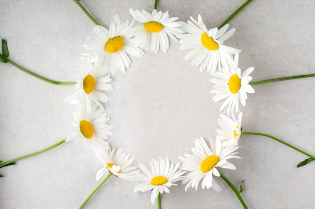 Flat lay with lovely camomiles on grey table copy space daisy flowers for birthday greeting