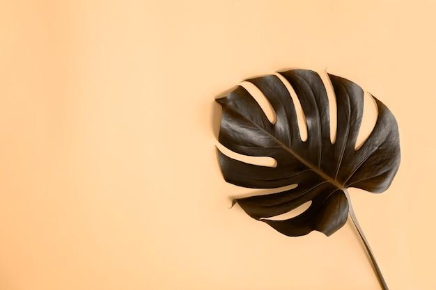 Плоская планировка с эффектом перевернутых цветов пальмовых листьев monstera, черного и бежевого. концепция пляжного сезона, концепция эко окружающей среды. тропический климат, рост домашних растений.