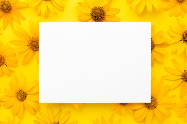 Flat lay yellow daisies with blank rectangle