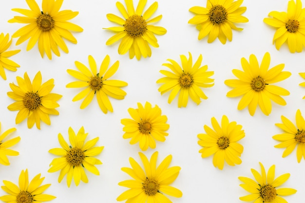Flat lay yellow daisies