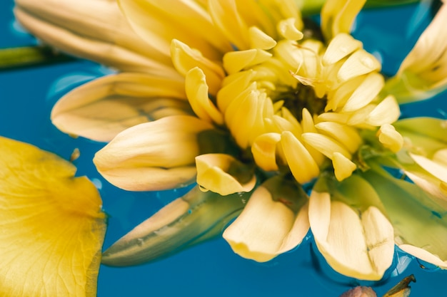 Flat lay yellow flower in water close-up