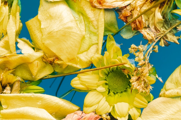 Flat lay yellow flowers and petals in water close-up