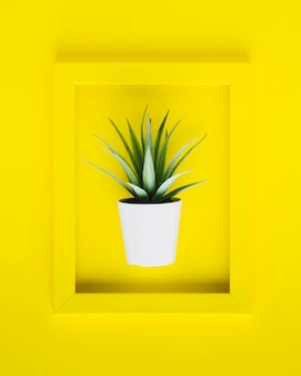 Flat lay yellow frame with plant inside