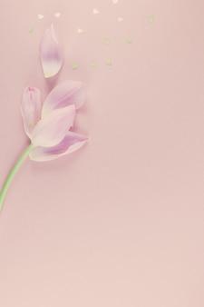 Розовый тюльпан с золотыми сердечками окропляет flat lay