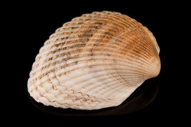平らな貝殻のクローズアップ