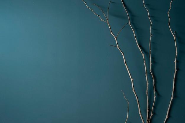 Flatlay dark dark background with dried twigs