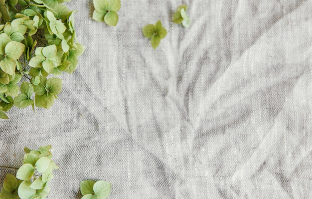 Flatlay of green hydrangea on gray textile background. minimal concept. flat lay, top view, copy space.