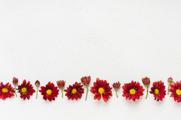 Flay lay of colorful spring daisies