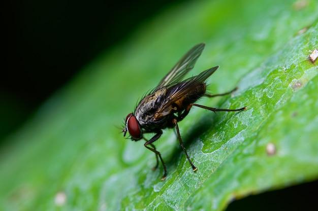 Flies on leaves in nature