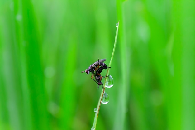 Flies on rice field in the morning