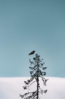 Flight of black bird above tree