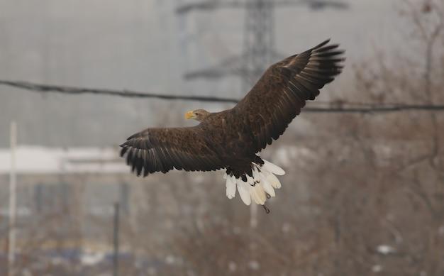 自然の中で凧の飛行