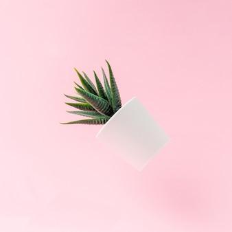 밝은 분홍색 배경에 떠있는 인공 식물