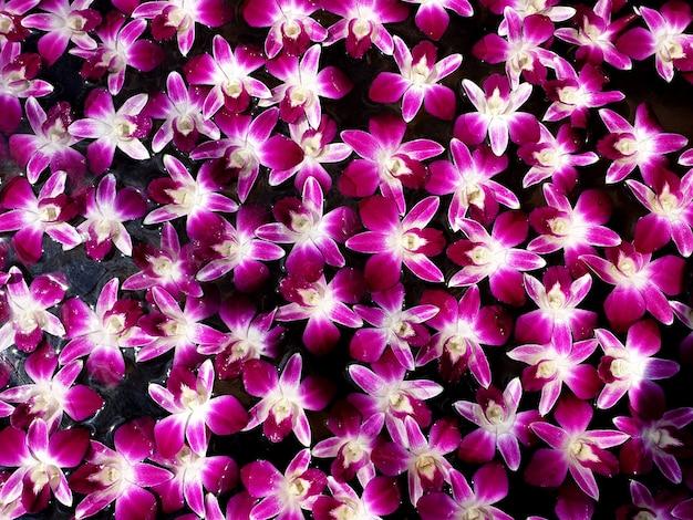 떠 있는 아름다운 난초 꽃 배경