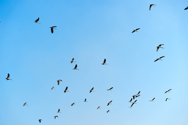 A flock of bird pigeon flies in the blue sky.