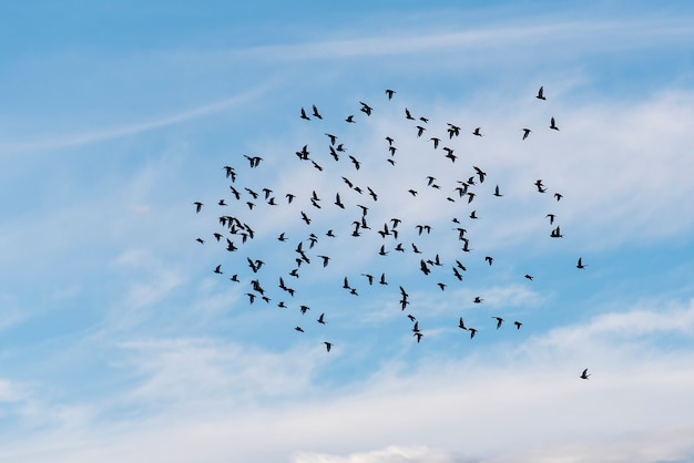 Flock of birds in blue sky