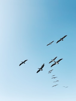 Flock of birds flying under blue sky during daytime