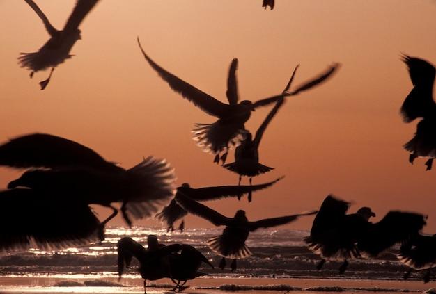 Flock of birds flying by ocean