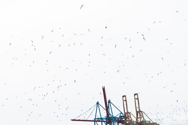 Flock of birds flying in sky with harbor crane