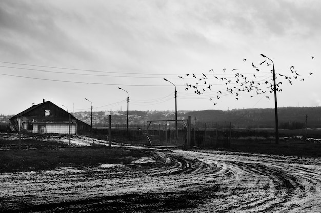 Flock of birds flying over a snowy road near a wooden cabin
