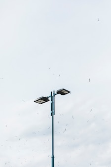 Flock of birds flying over the street light against sky