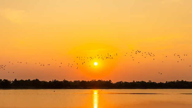Flock of birds in the reservoir, shadow of sunset, seagull