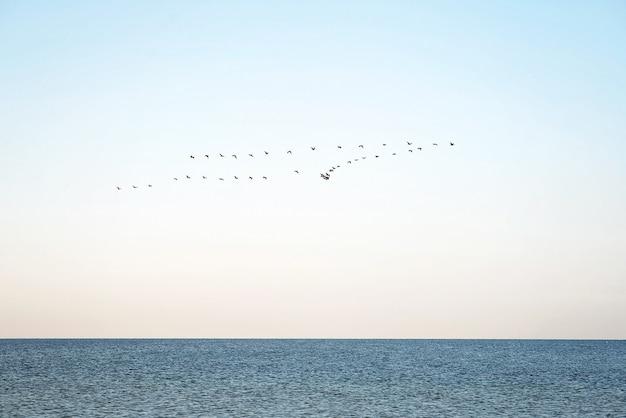 A flock of birds over the sea. seasonal migration of birds to warmer regions.