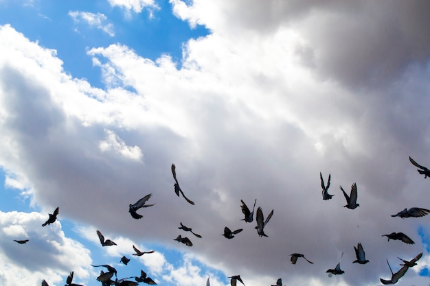 A flock of birds soaring in the cloudy sky