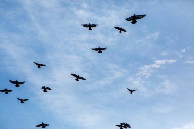 Flock of flying pigeon against blue sky