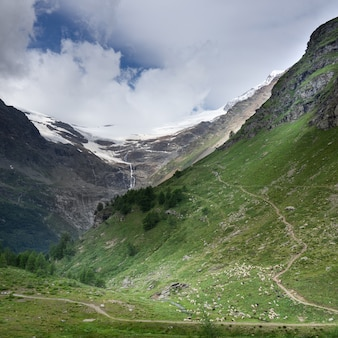 Flock under the glacier in the alps