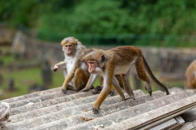 A flock of monkeys rummaging in a junkyard.